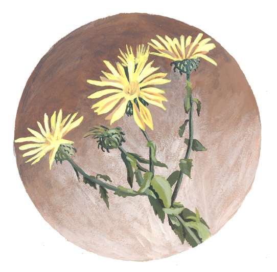 Grindelia Squarrosa or Curly-Top Gumweed, acrylilc painting by Jonathan Machen