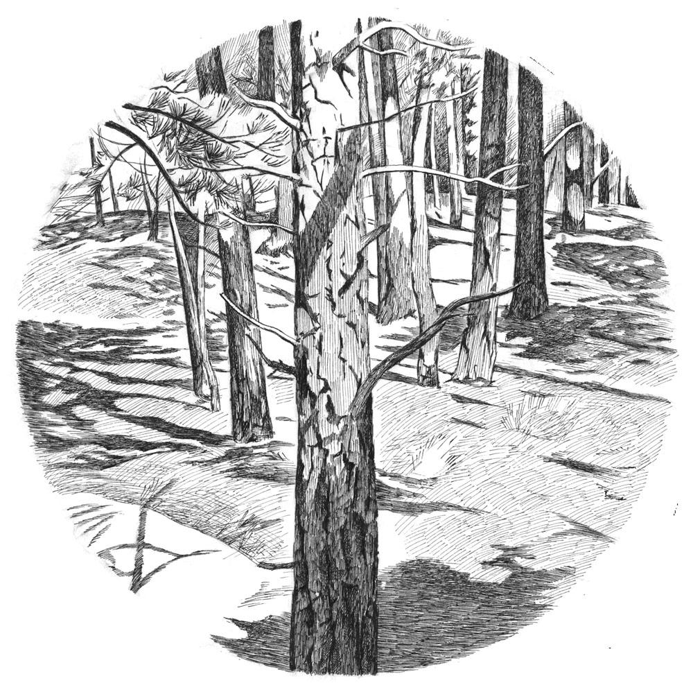 Round Forest, Boulder, 1996
